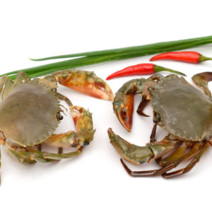 Frozen Soft Shell Crab Pieces