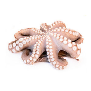 Frozen Whole Octopus