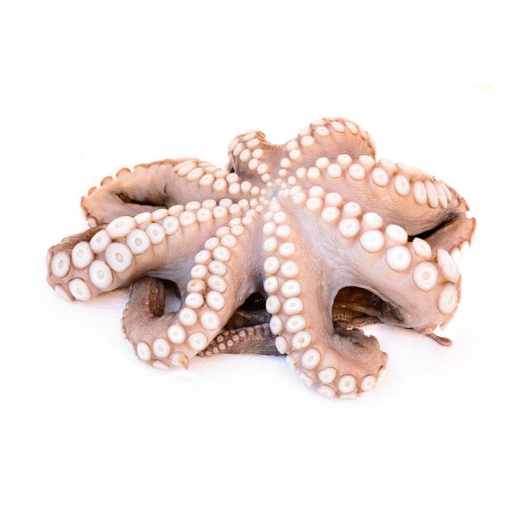 Frozen Whole Octopus